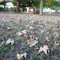 L'automne et son cortège