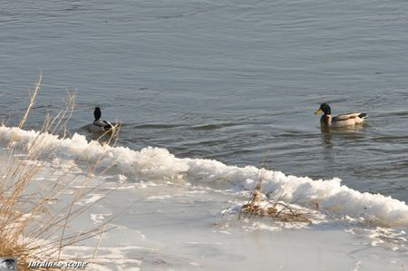 Loire-glace-canards