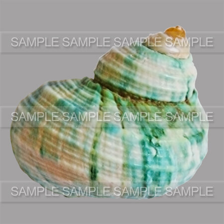 GRAPHIABELLA_SHELLS_ZOOM_05