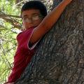 l'arbre3