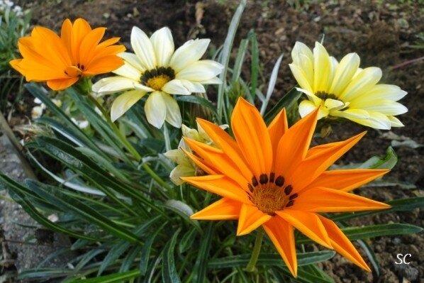 Fleurs-d-automne-05