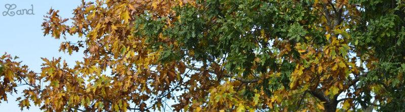 Land_automne3