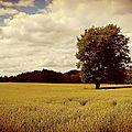 Embrassac, arbre isolé 3 (15)