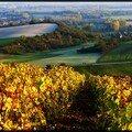 Au coeur des vignes champenoise ...