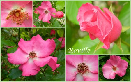 roville1