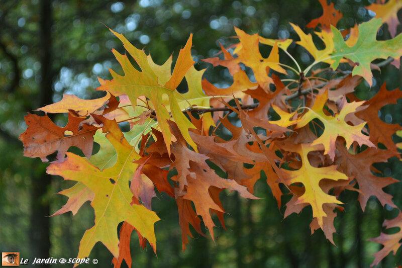 Couleurs-d'automne