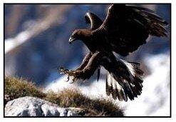 Montagne-Aigle