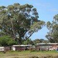 (90) Walmer township tour