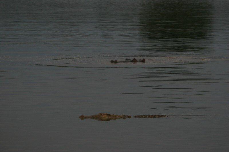 Hippo et Croco