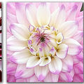 Triptyques dahlias