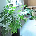 plantes grande