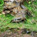 Petit ruisseau 3 - Trajet Le Falzet - Saint Alban sur Limagnole