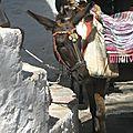 Un âne grec