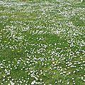 Vraies fleurs de pâques