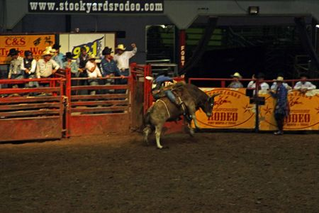 Rodeo_27