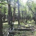 el chalten dans les bois