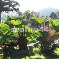 Turrialba lodge_jardin_22