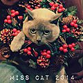 Election de miss cat 2014