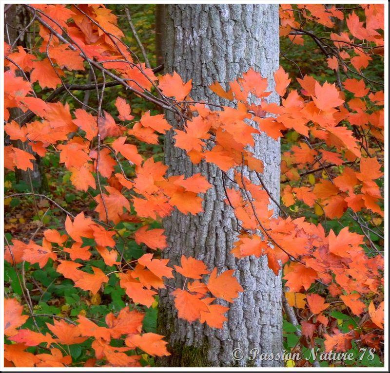 La forêt aux couleurs d'automne (26)