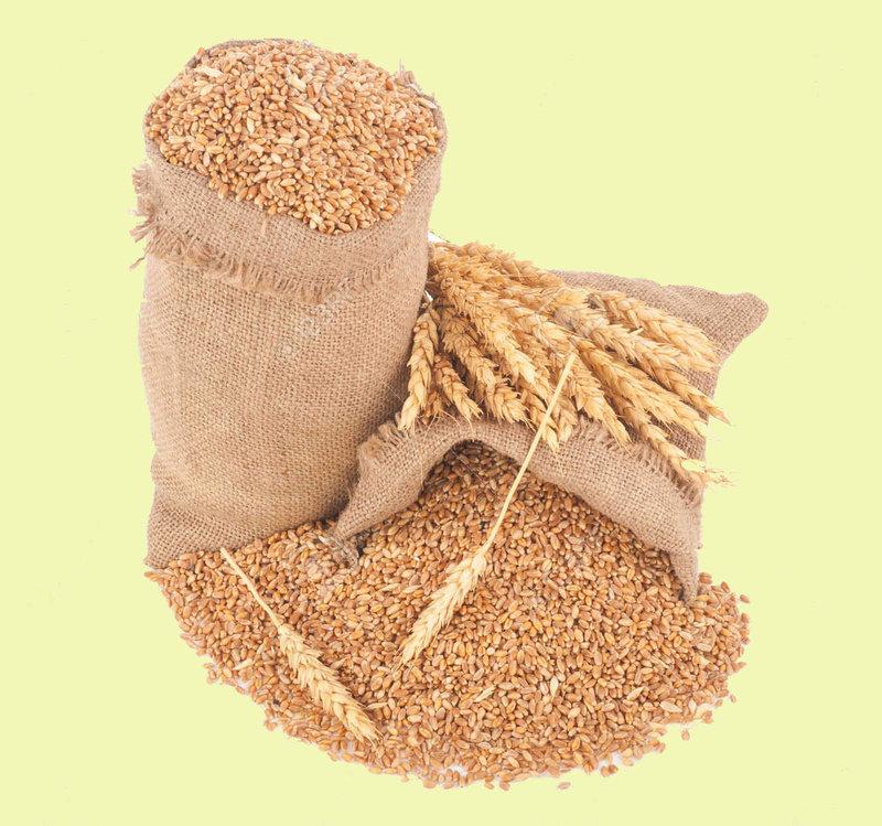 Grains sacs de blés