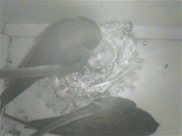 08-06-2017 10-05-22 M Nest 1 - change and feed