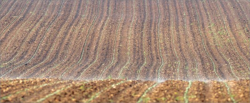 plaine semis brume chaleur 210519