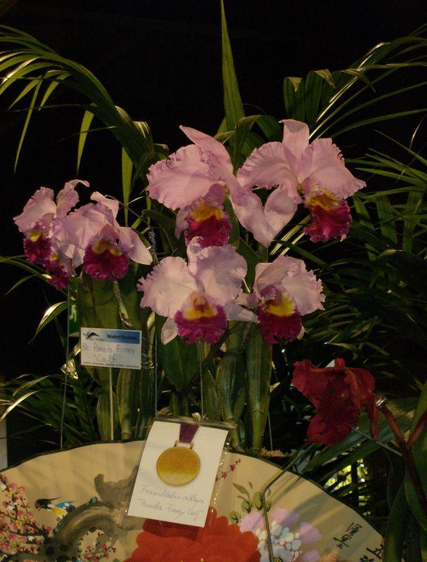 orchidées 2010 003