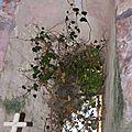 ST ROME DE BERLIERES 1235