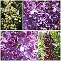 Fleurs mai 2013 (7)