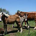 Mai 2012, chevaux