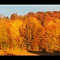 Fenêtre, automne...