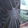 Toiles d'araignées révélées par le givre de décembre