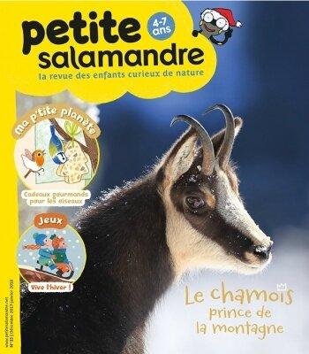 Petite Salamandre 15 (1)