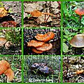 Quelques champignons du québec