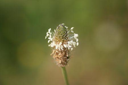 fleur_03