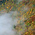 Brouillard et couleurs