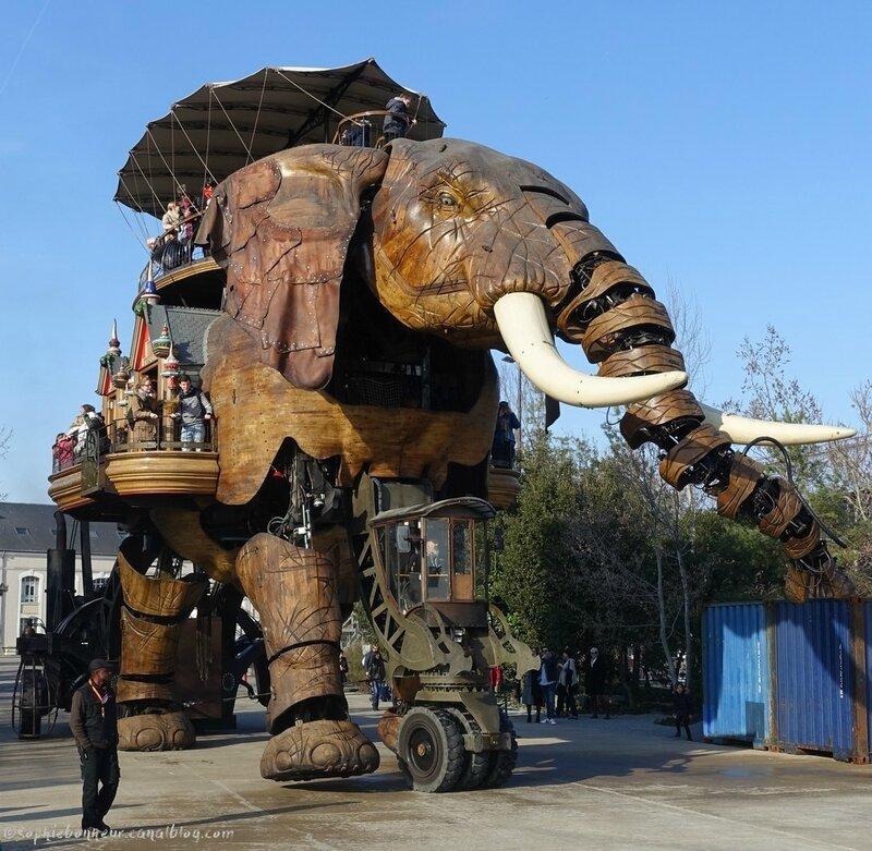 chantiers éléphant arrive