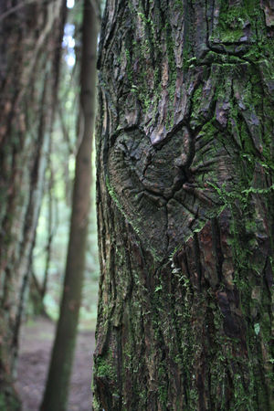 Tree_with_heart