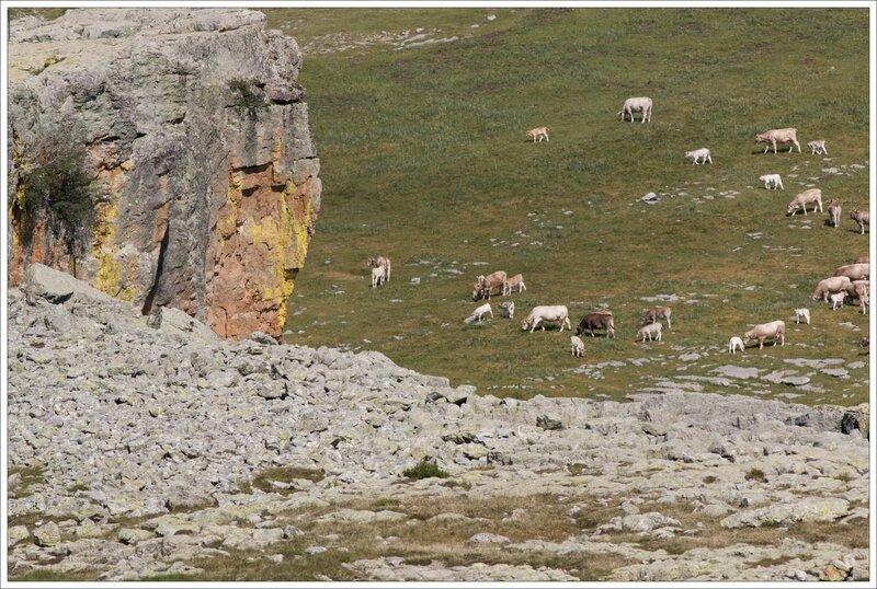 Haut Aragon 120615 Mondoto 74 troupeau vaches falaise