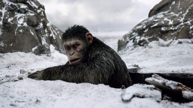 la-planete-des-singes-suprematie-de-matt-reeves_5920438