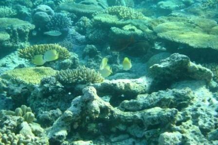 Aquarium12