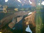 photos_aquarium_014