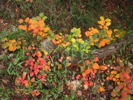 automne_2010_vinaigrier_004a