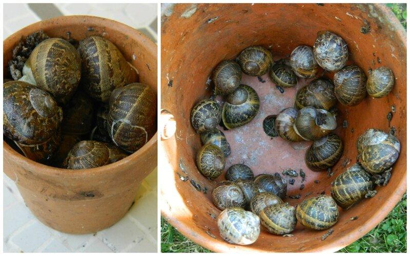 escargots1