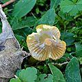 champignon-05911 (12)