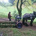 Débardage au parc de pinelon - st etienne(42)