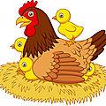 Qui de l'oeuf ou de la poule ?
