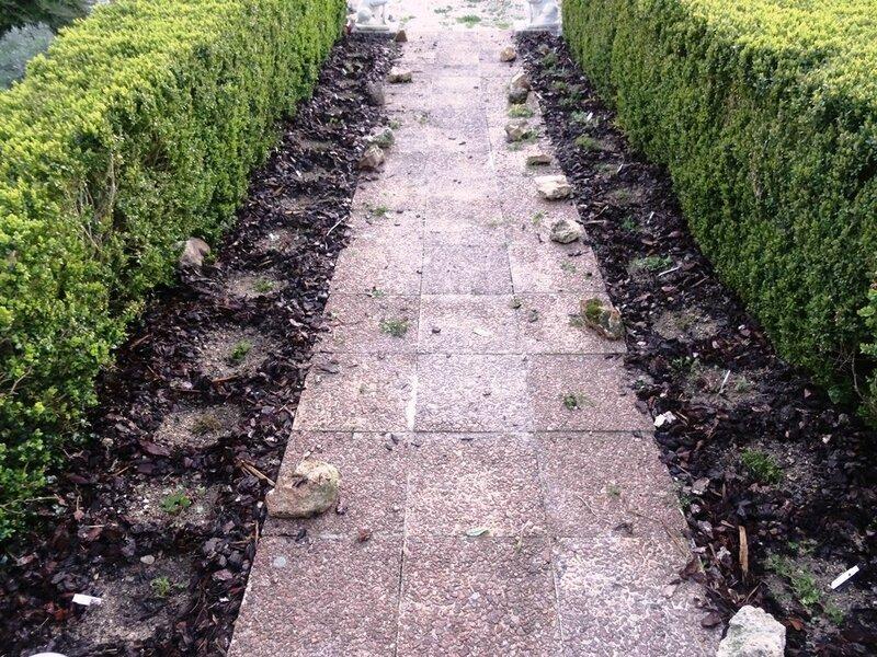 geranium et phlox desherbes et degages