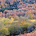 Arbres en automne dans le giron d'issaux...