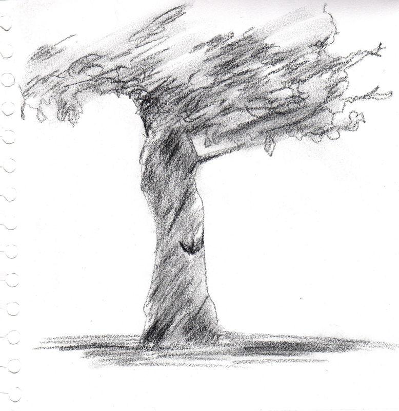 Divers croquis dessins main lev e format a4 ou moins - Croquis arbre ...